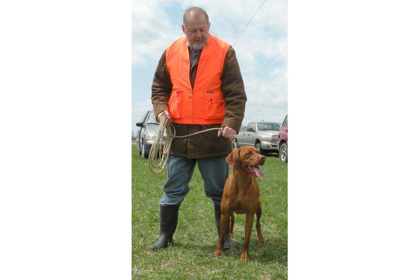 Vizsla dog in field ring