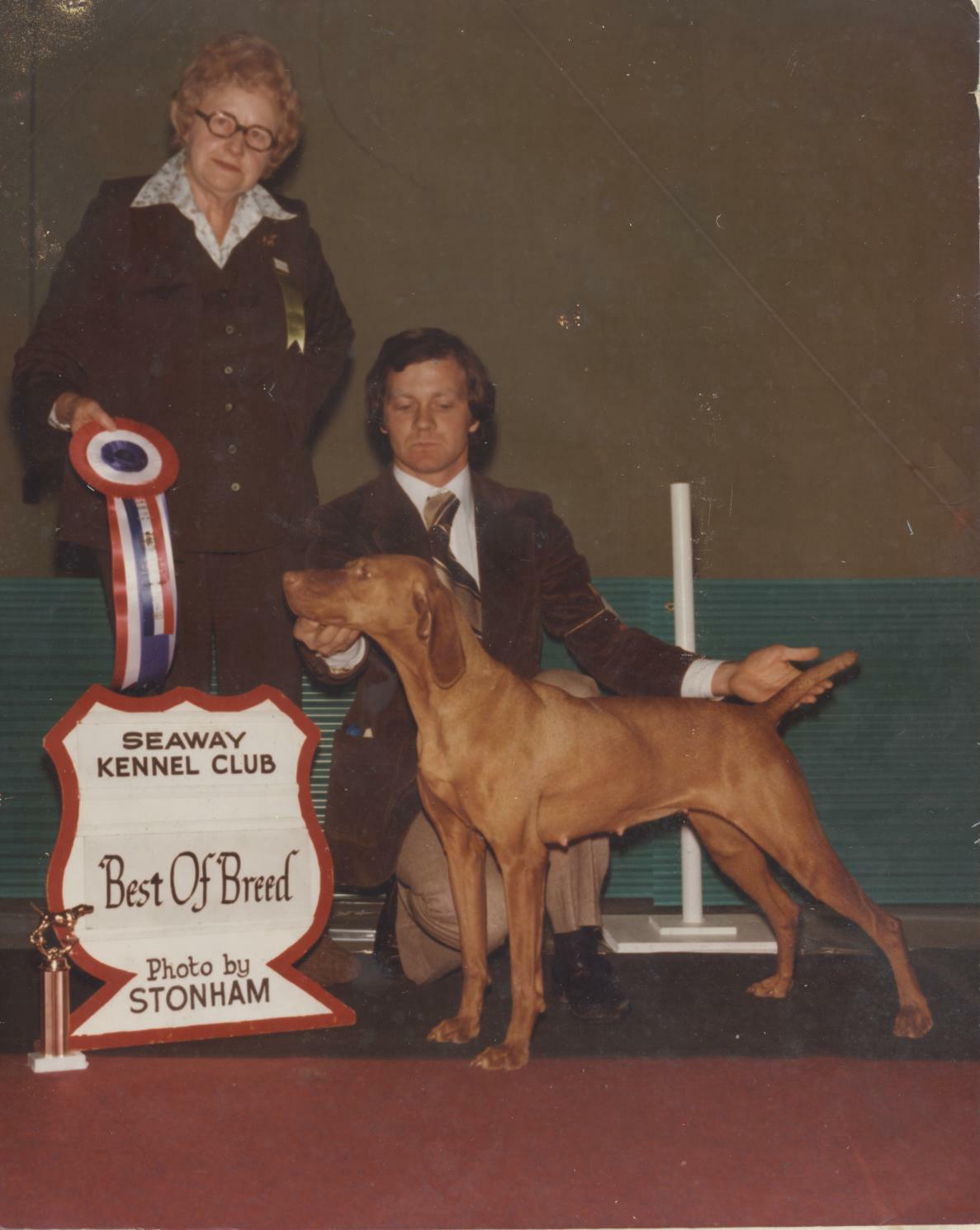 Vizsla Best of Breed 1978