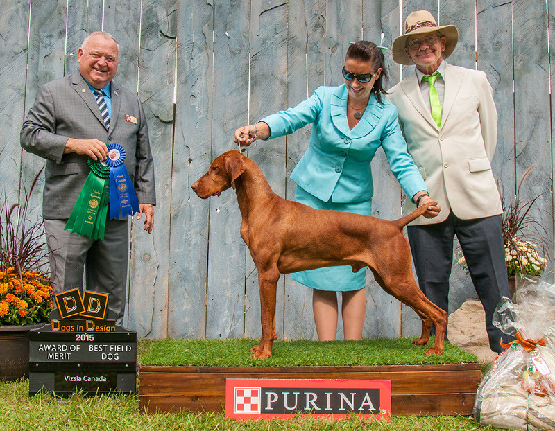 Vizsla Zeus national champion
