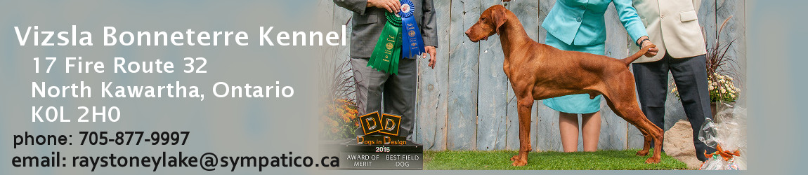 Vizsla Breeders in Ontario