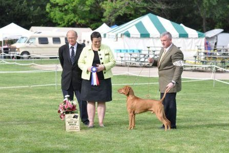 Ripper- Vizsla Best of Breed