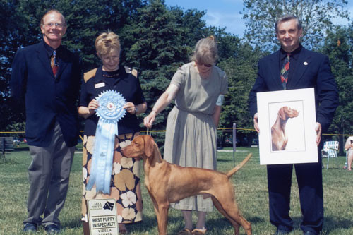 Vizsla Best Puppy Award