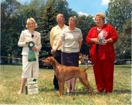 Vizsla dog winning in the show ring
