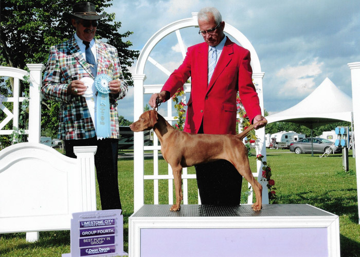 Vizsla Moxie - Limestone City Dog Show Winner