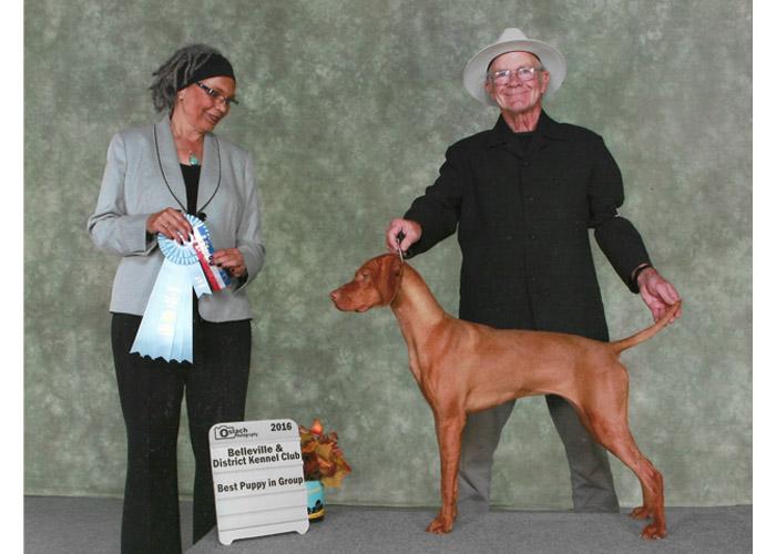 Vizsla Sassy - Best Puppy - Bellville Show 2016