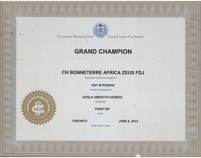 Vizsla Grand Champion certificate for Vizsla Bonneterre Kennel's Zeus
