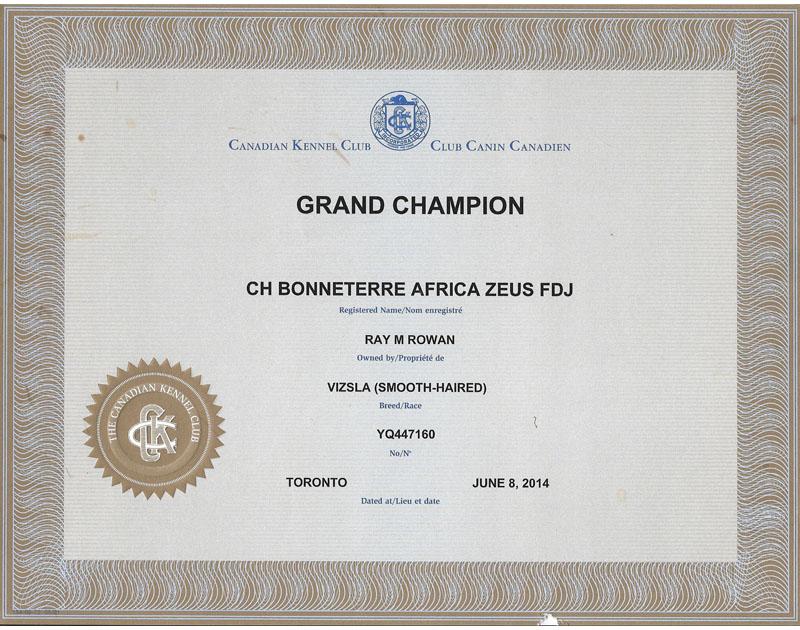 Vizsla Grand Champion certificate for Vizsla Bonneterre Kennel's Zeus