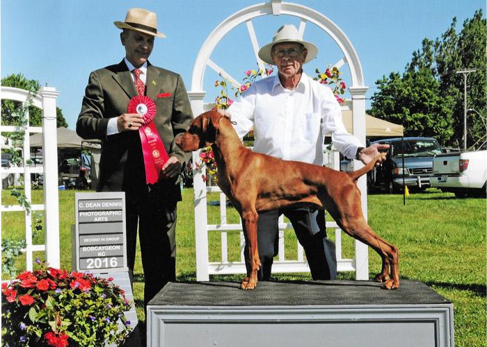 Zeus-Bobcaygeon Kennel Club Show 2016