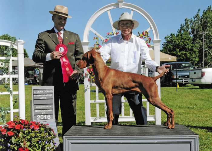 Zeus - Second in Group Bobcaygeon Kennel Club 2016