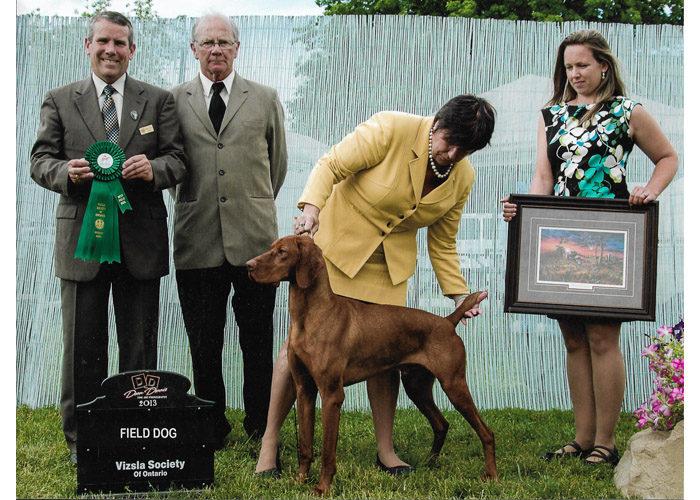 Zeus- Filed Dog Winner - Vizsla Society of Ontario