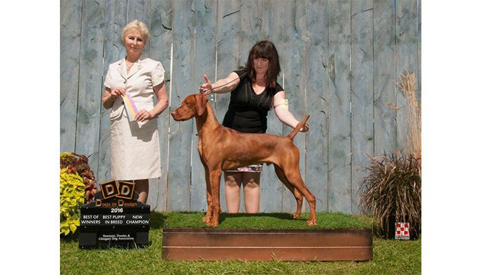 Vizsla Remy at Stormont, Dundas & Glengarry Dog Ass. Show