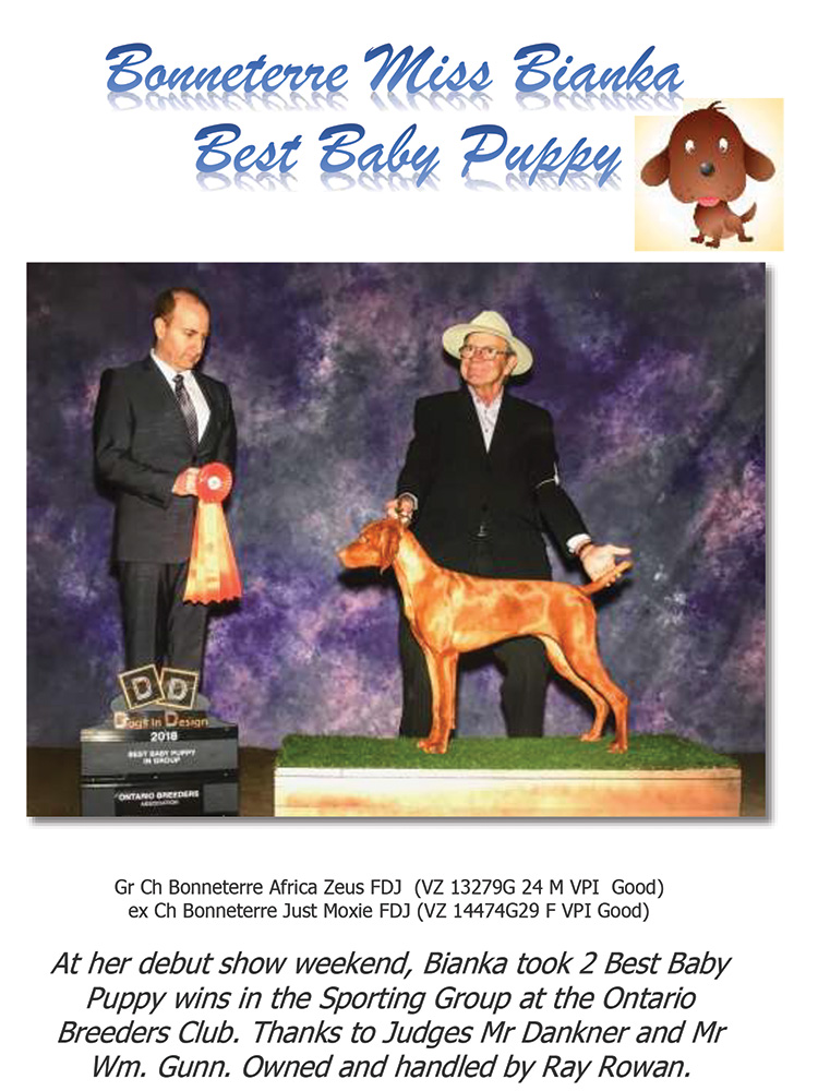 Bonneterre Vizsla Bianka wins 2 Best Baby Puppy
