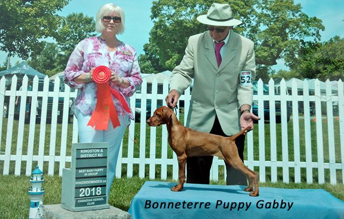 Bonneterre puppy Gabby winning Best Baby Puppy in Group
