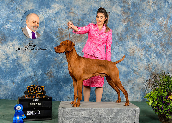 Show Achievement !st Group Forest City Kennel Club